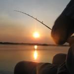 Tiger fishing on the Zambezi