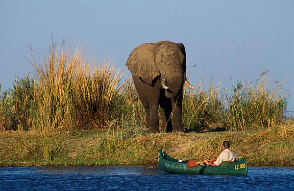 Zambia-Lower Zambezi National Park-AfricaImageLibrary
