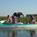 Zambia boat safari
