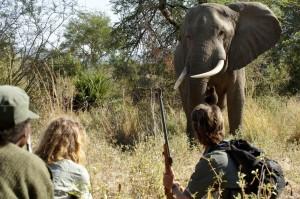 walking-safari-kasanka-national-park